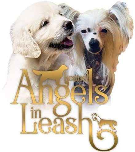 Angels in Leash